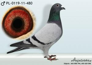 PL-0119-11-480